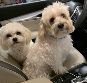 Dogs Love Car Rides!! [PHOTO]