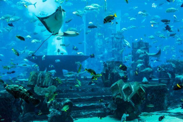 Stingray fish. Aquarium tropical fish on a coral reef