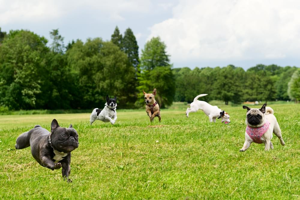 A Huge Dog Park Is Coming To Downtown Indianapolis