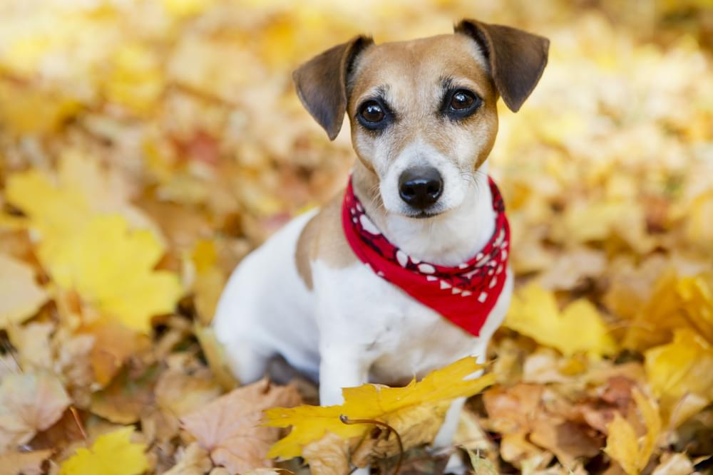 Indianapolis Animal Care Services: Free Adoption 10-Day Event Starts Today