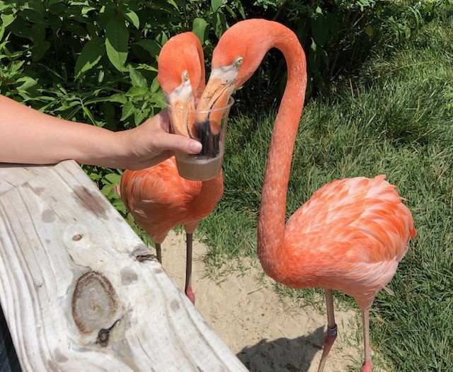 The 'Flamingo Lady' Gets Her Dying Wish To Meet One Of These Beautiful Birds. Watch…