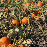 Our Top 5 Pumpkin Patches In Central Indiana To Visit This Weekend!