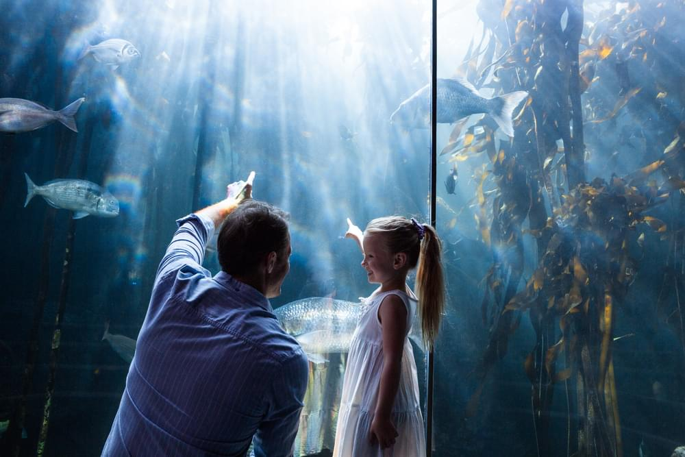 """Kids Get Free Admission Into Newport Aquarium For """"Winter Family Days"""""""