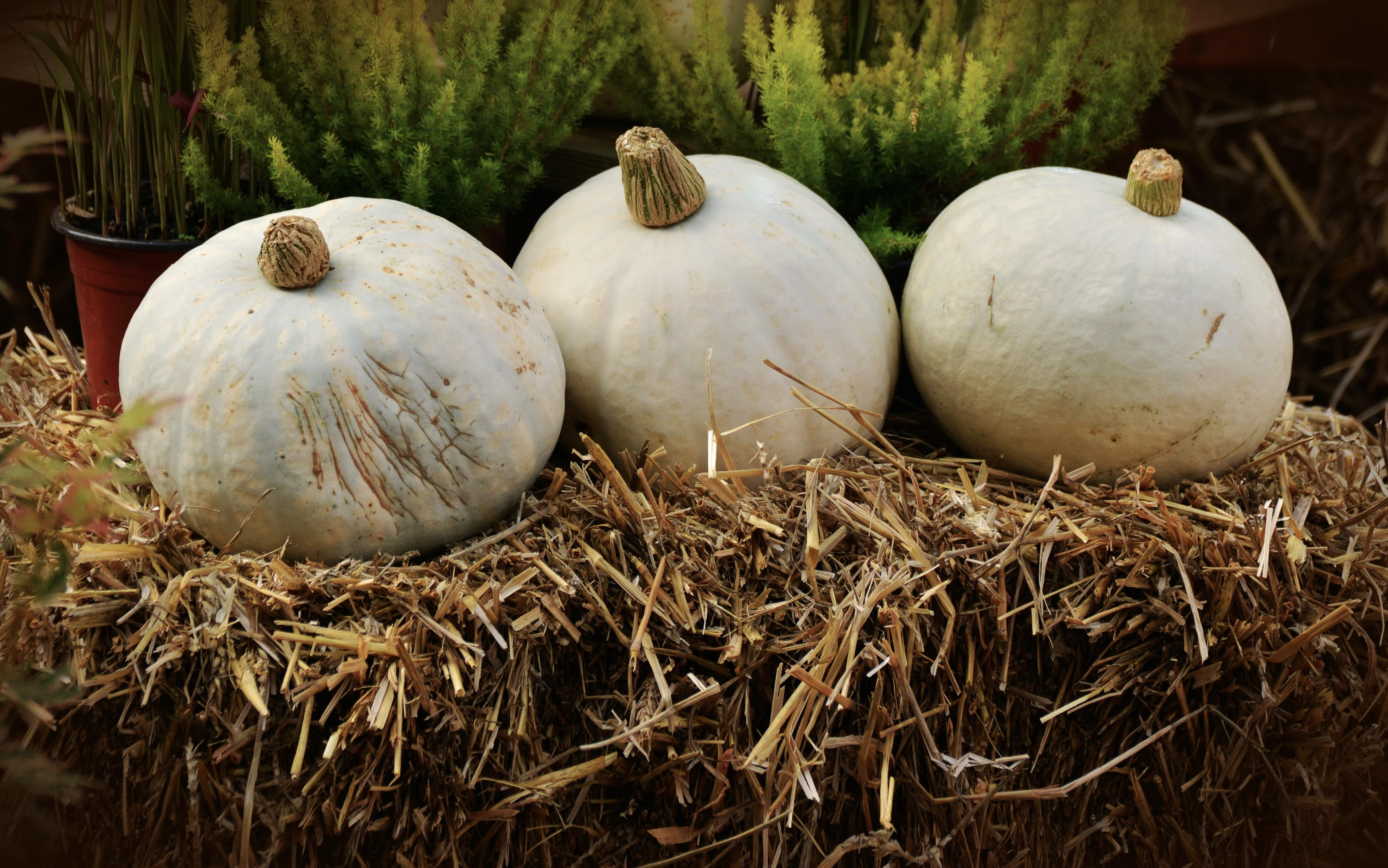 NASH Nine: The Best Places Around Nashville to do Your Pumpkin Picking