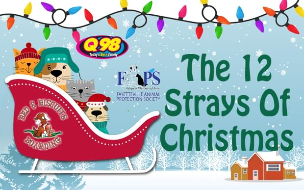 The 12 Strays Of Christmas!
