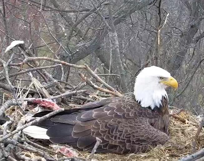 Eagle cam 2019 FI