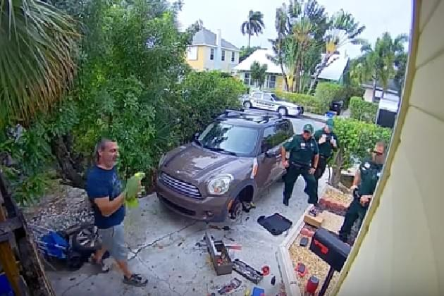 Neighbor Calls Police After Parrot Screams 'Let Me Out!' [VIDEO]