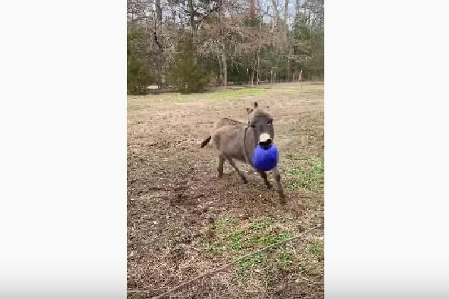This Donkey Got A New Ball and He Couldn't Be More Excited [VIDEO]