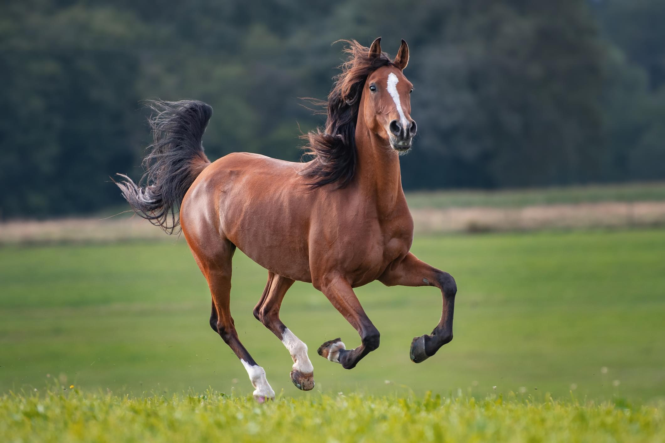 Horse Running On Land