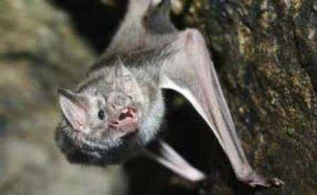 Fresno County Warns of Rabid Bats
