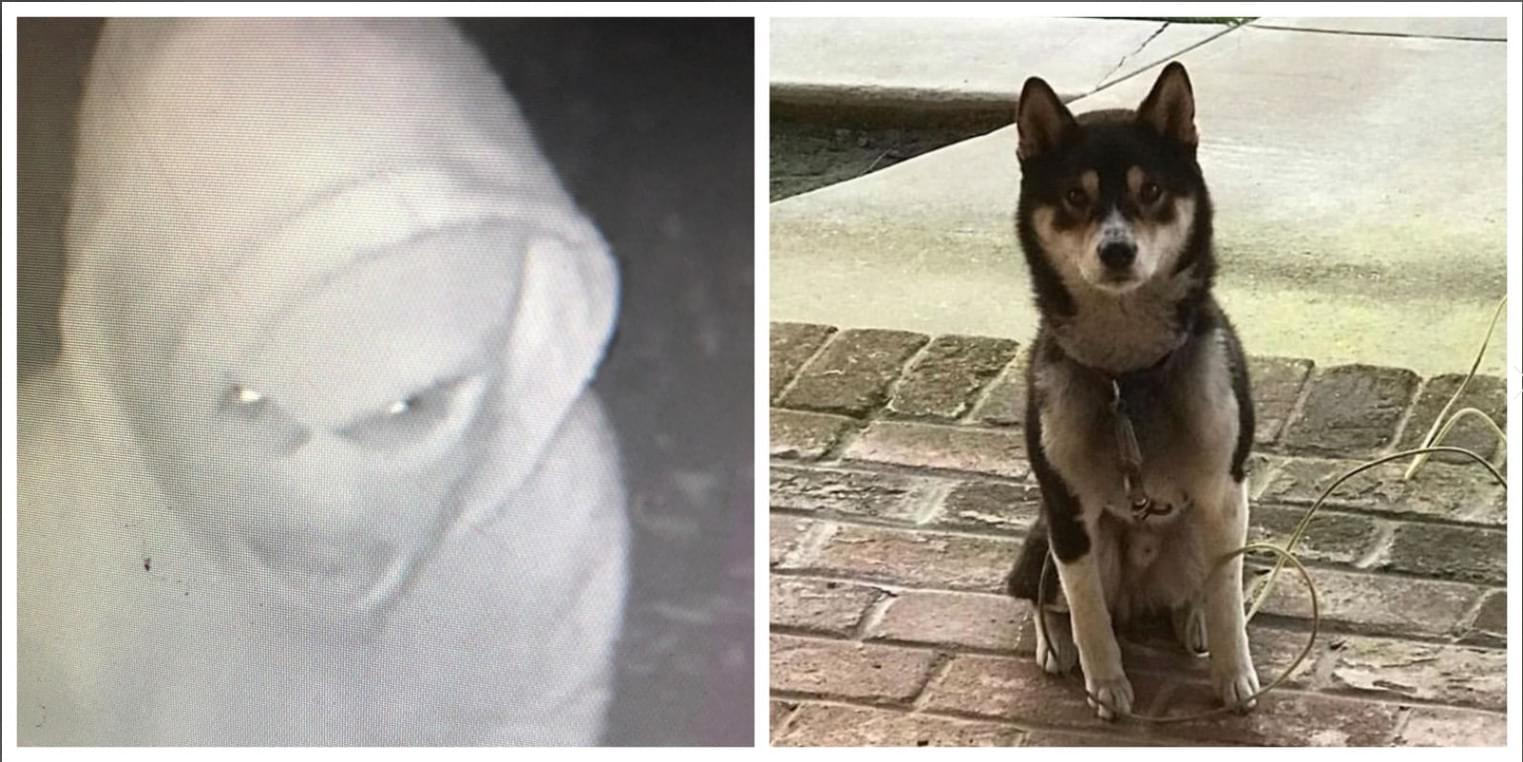 EXCLUSIVE: Dog stolen from Selma home found thanks to Viewer from KMJ's News Partner