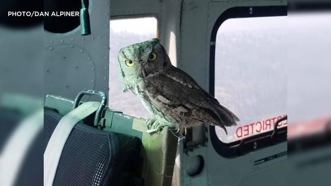 Co-Pilot Owl Lands Inside Helicopter Fighting Creek Fire