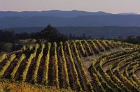California Vineyard Offers Dream Job