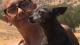 DOG WOMAN DANIELLE JONES FOX 26