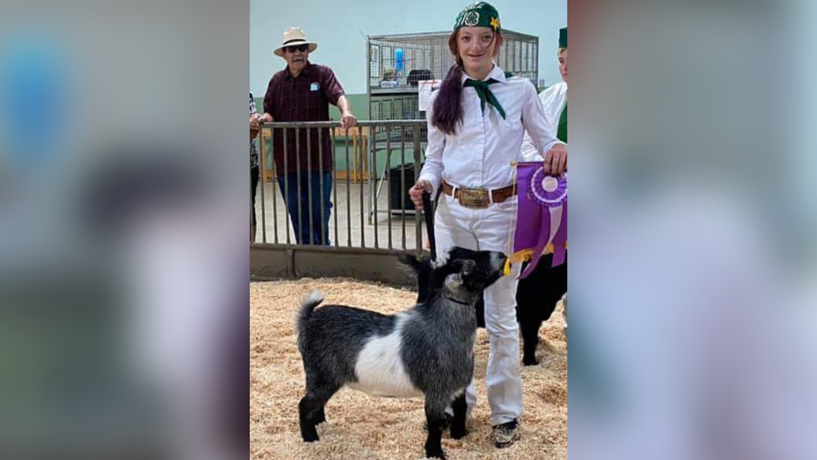 """""""Joe"""" the Pigmy Goat, 2 Horse Saddles Stolen from Terra Bella Family in Tulare County"""