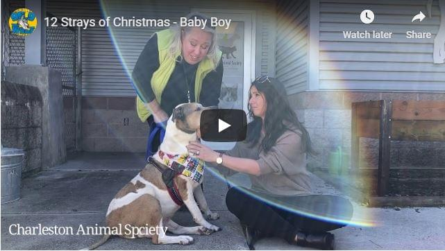 12 Strays of Christmas