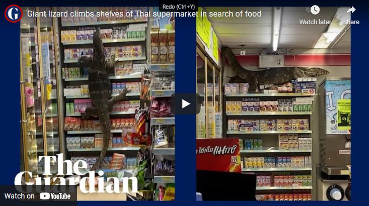 WATCH: Huge Monitor Lizard Goes Shopping