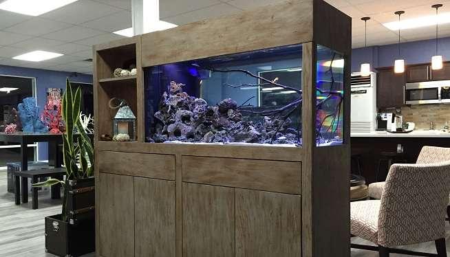 Aquarium furniture makes a splash at Jordan's