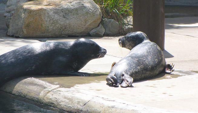 Roger Williams Park Zoo raising funds to repair harbor seal exhibit