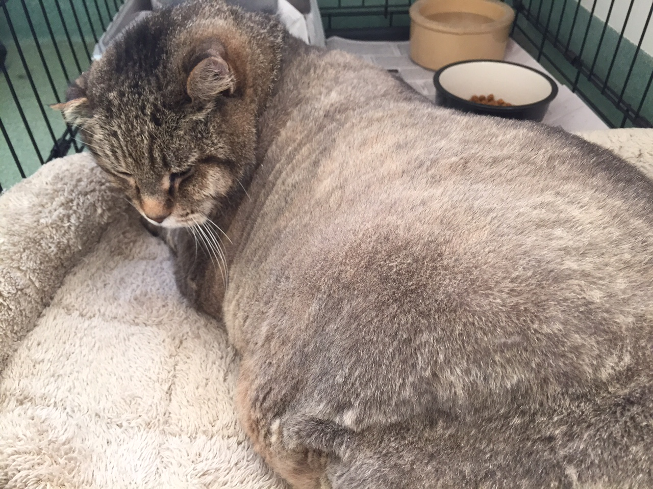 26-pound cat dies after being abandoned in local park