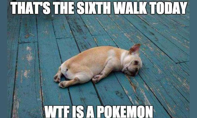 The Hilarious Truth About Pokémon GO