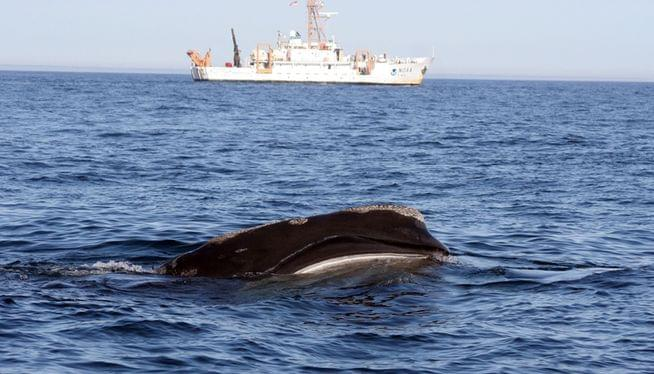 NOAA extends protective area for rare whales