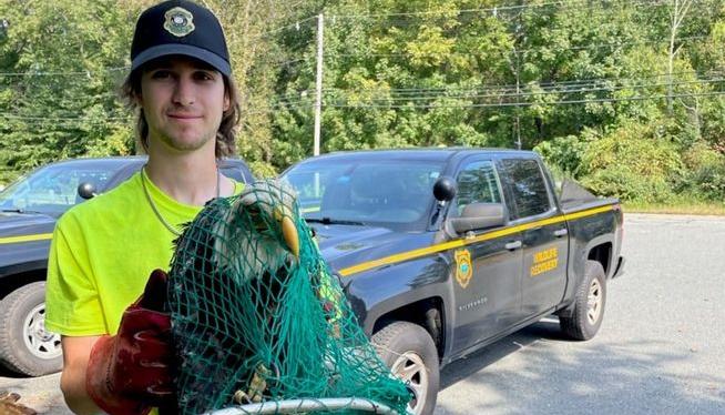 Injured bald eagle, found to be blind, euthanized