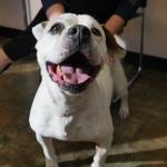 Kelly's Pet Project 11/14: Chenzi