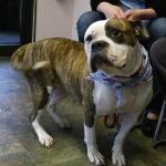 Kelly's Pet Project 2/20: Sissy