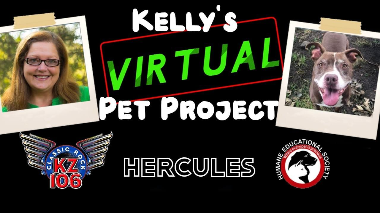"Kelly's ""Virtual"" Pet Project: Hercules"