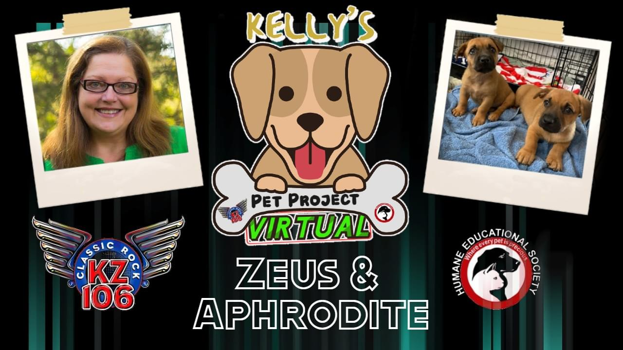 Kelly's Virtual Pet Project: Zeus and Aphrodite