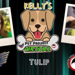 Kelly's Pet Project: Tulip