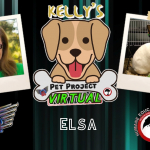 Kelly's Pet Project: Elsa
