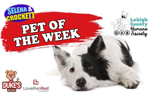 Pet of the Week!