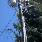 WATCH: A Lineman Rescue a Cat From a Powerline