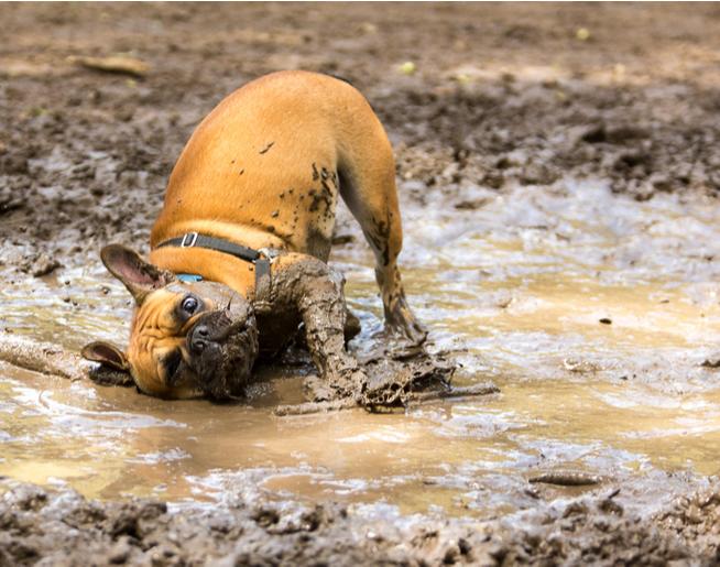 Jim and Amanda's Daily Dilemma-My Dirty Dog
