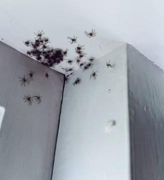 OMG!  This Woman's Daughter Found TONS Of Spiders In Her Room!