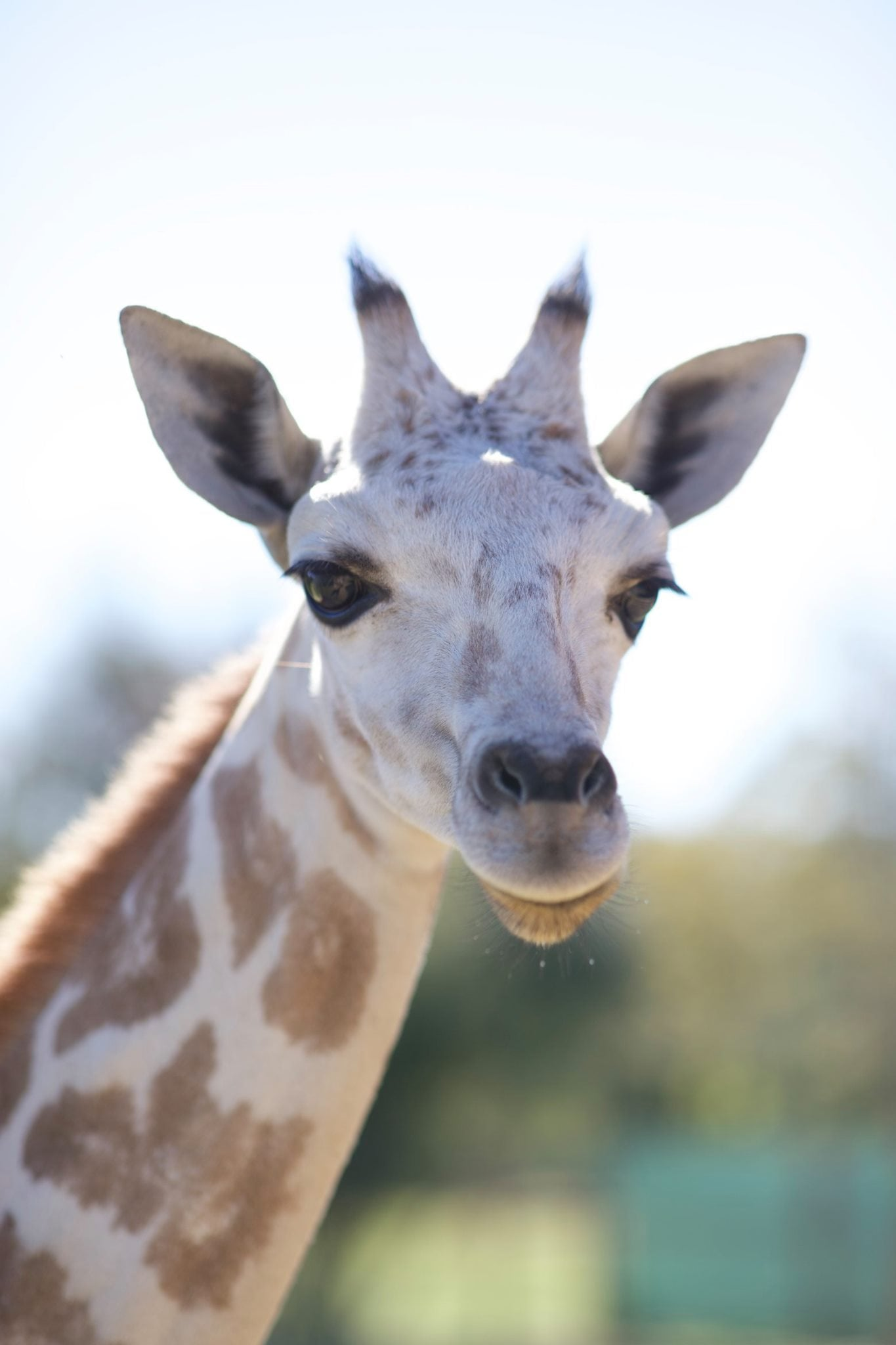Who Wants To Have Lunch With Giraffes?  There's A Place In Louisiana Where You Can!