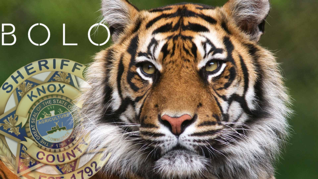 Tiger Spotted in East Knoxville Near Forks of the River