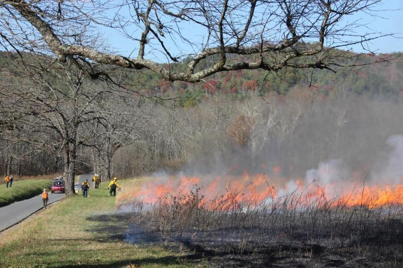 Tennessee Creating Strike Team for Prescribed Forest Burns