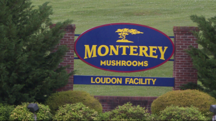 Over 50 COVID-19 Cases Reported at Loudon County Mushroom Plant
