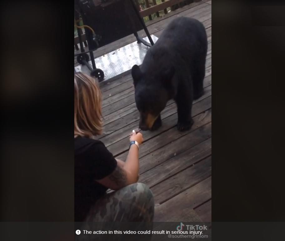 Virginia Woman Facing Charges After Viral TikTok of Feeding Black Bear in Gatlinburg