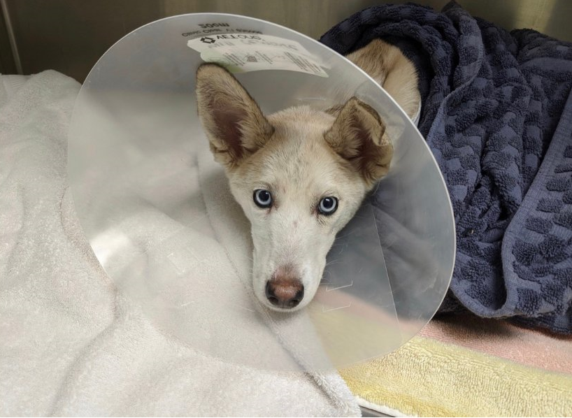 KPD Asking For Help Finding Owner of Dog Thrown From Overpass