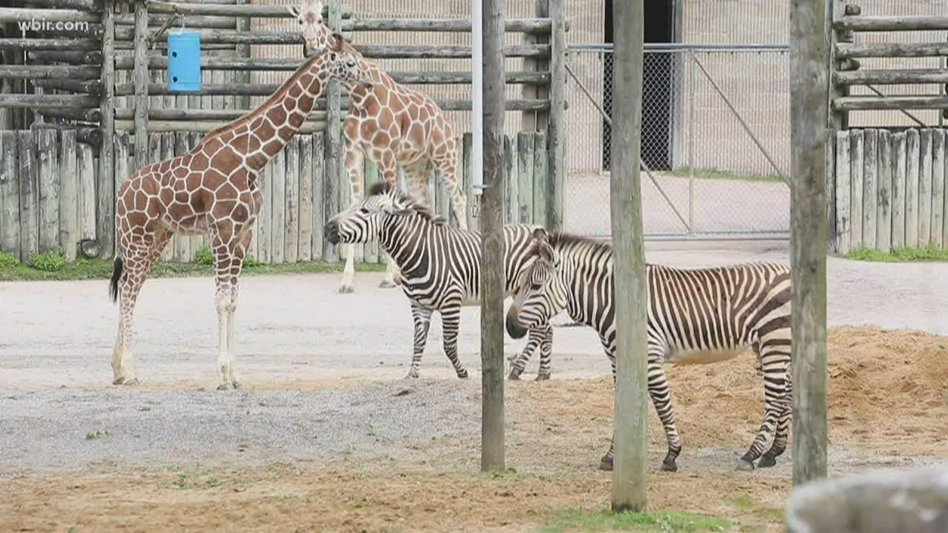Two of Zoo Knoxville's Newest Babies are Now on Display