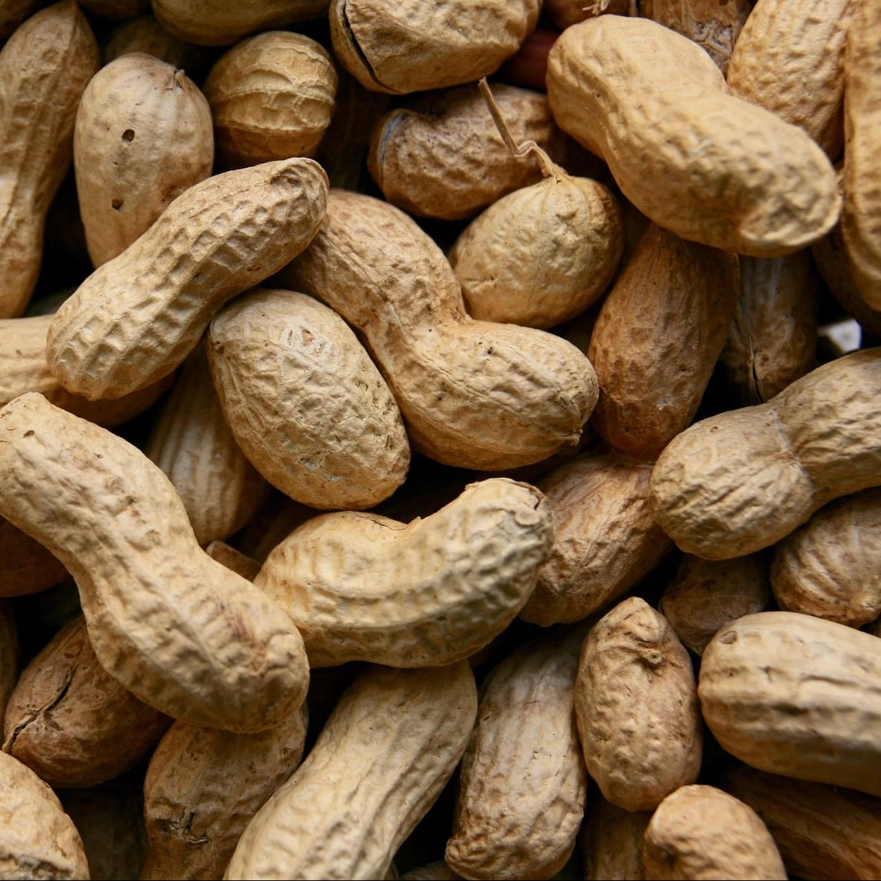 New treatment for peanut allergies!