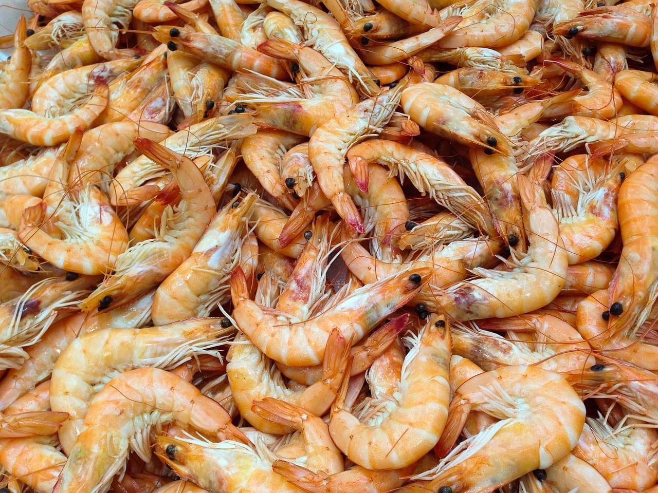 2020 Delcambre Shrimp Festival Canceled