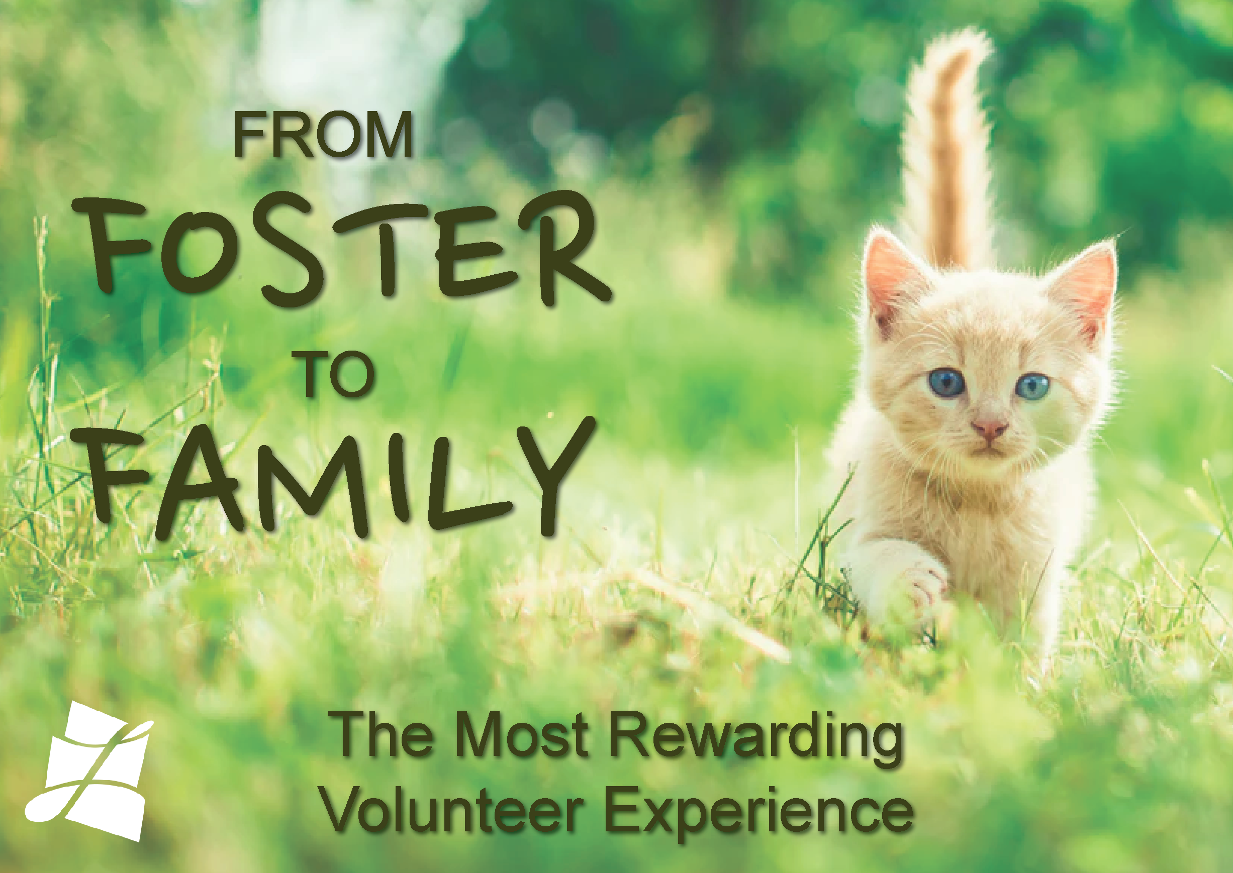 Shelter In Need Of Volunteers To Foster And Adopt