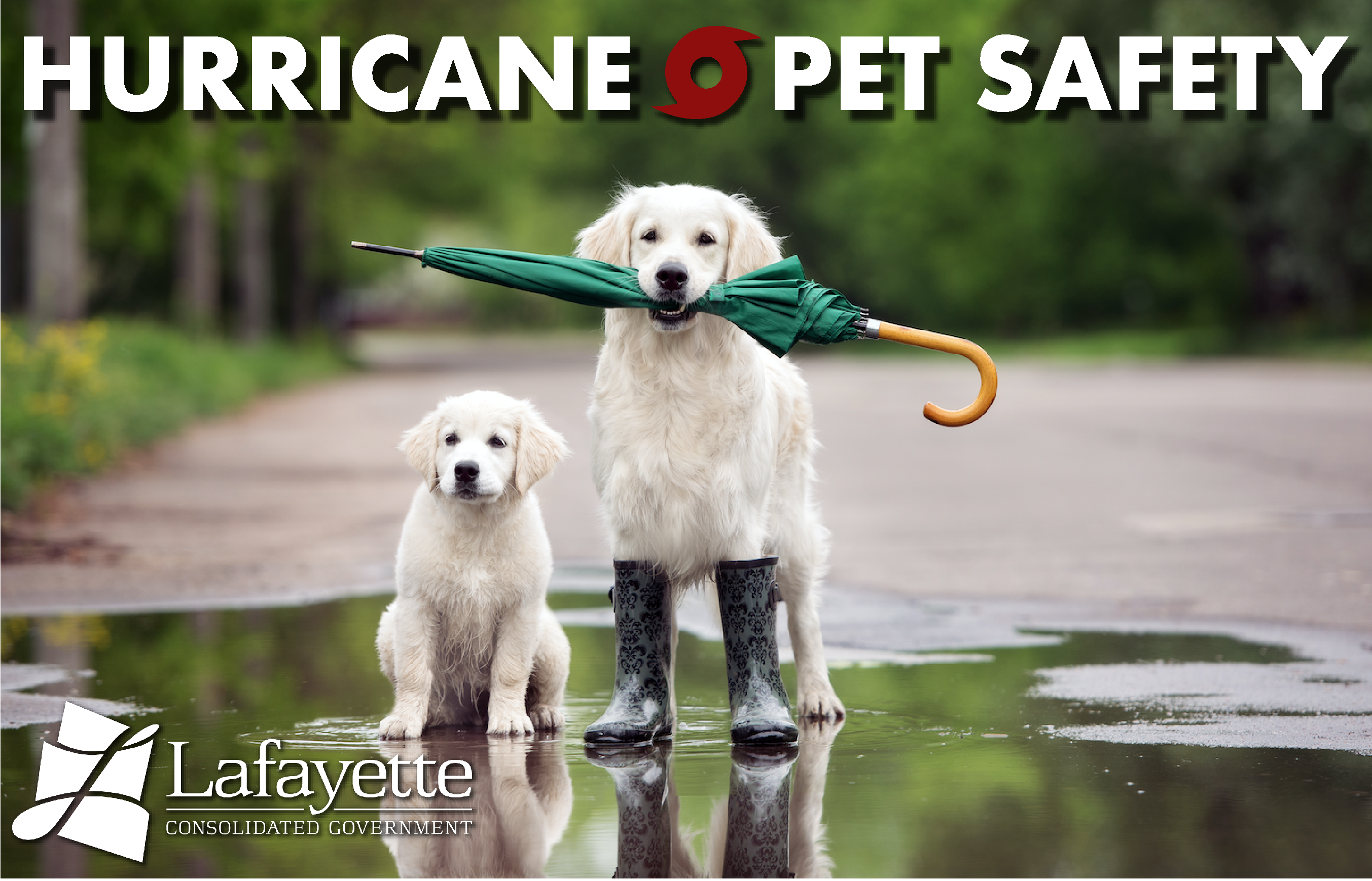 Hurricane Plan For Pets