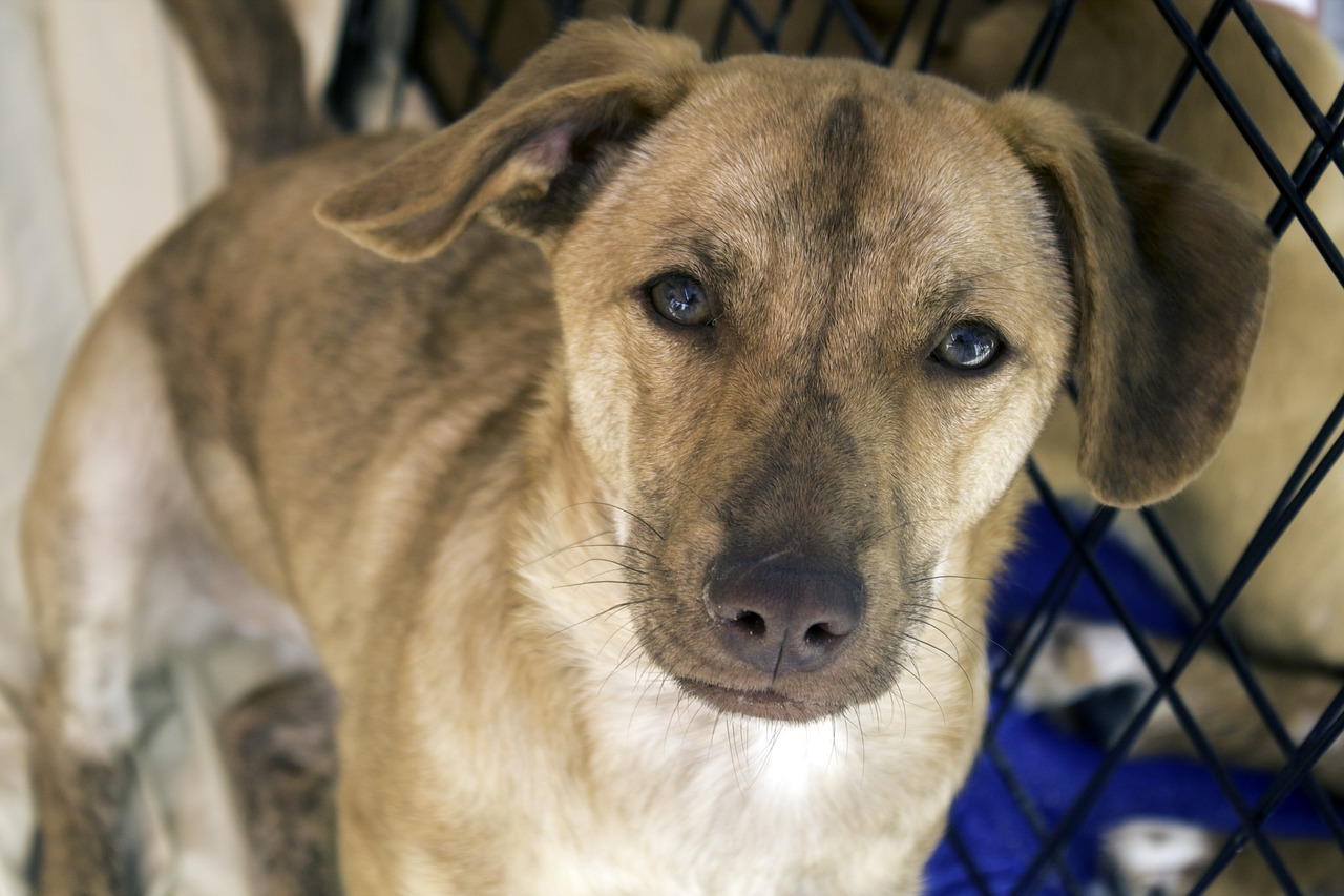 Lafayette Animal Shelter and Care Center is waiving adoption fees