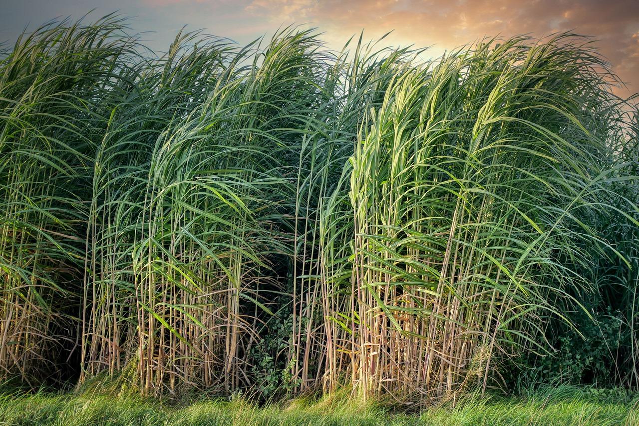 Louisiana Sugar Cane Festival Returns In 2021
